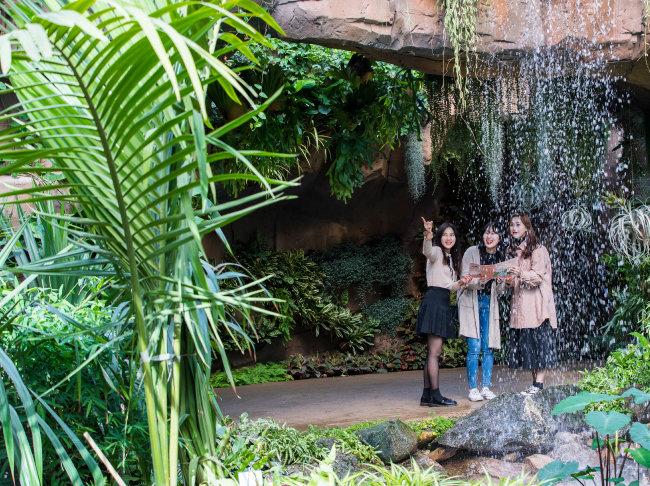 서울식물원 온실 내 열대관. 싱싱한 나무 냄새가 가득해 밀림 한가운데 선 듯한 느낌을 받는다.