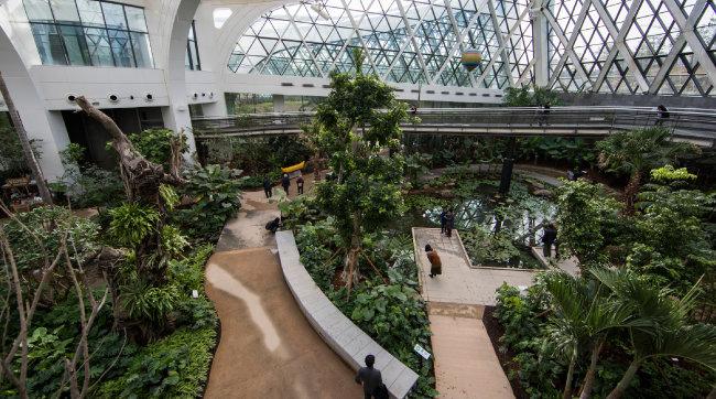 서울식물원 지붕은 유리보다 빛 투과율이 높은 특수비닐로 만들어졌다. 햇빛이 쏟아져 들어오는 식물원 내부 스카이워크를 걸으면 신선한 즐거움을 누릴 수 있다.