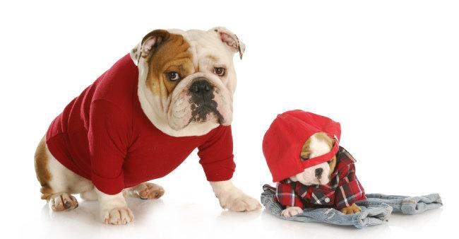 강아지 겨울 우울증 이기는 비법