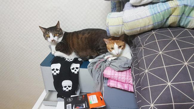 서울 마포구에 사는 최모(여·27) 씨가 자취방에서 기르는 고양이들.