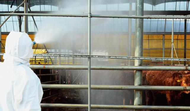 전북 정읍에서 한 가축방역관이  방역 작업을 하는 모습. [뉴스1]