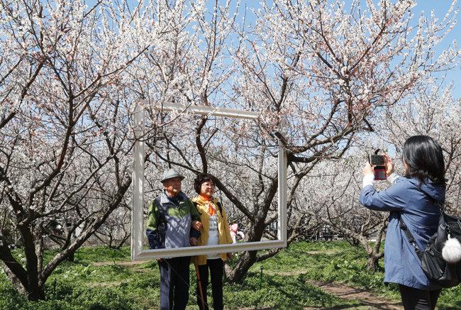 """""""이 봄이 가기 전에 사진 한 컷 박읍시다."""" 휴애리 자연생활공원.  [박해윤 기자]"""