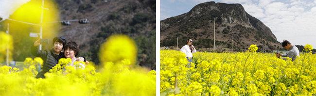 '인생샷'은 유채꽃밭에서. 산방산 유채꽃밭.(왼쪽) 산방산을 배경으로 한 컷. [박해윤 기자]