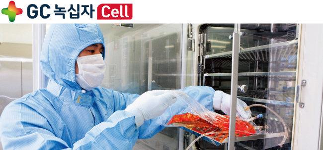 GC녹십자셀이 자랑하는 우수의약품제조품질관리기준(GMP) 시설에서 이뮨셀-엘씨를 생산하고 있다. 한 연구원이 세포를 배양하는 모습. [사진 제공·GC녹십자셀]