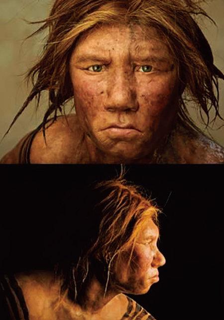유전자와 화석을 통해 복원한 여성 네안데르탈인 윌마(wilma)의 모습. [어린이동아]