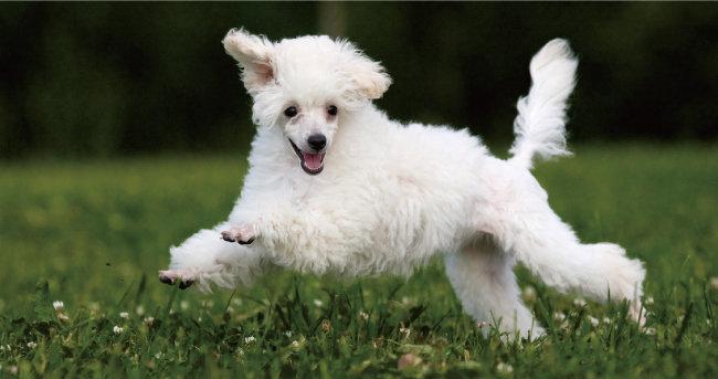 정신없이 뛰어다니는 반려동물은 앞보다 옆에서 찍는 게 동작을 포착하기 쉽다.