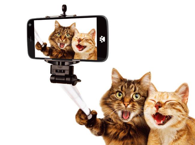 무음 카메라 애플리케이션이나 셀카봉을 쓰면 자연스러운 표정을 포착할 수 있다.