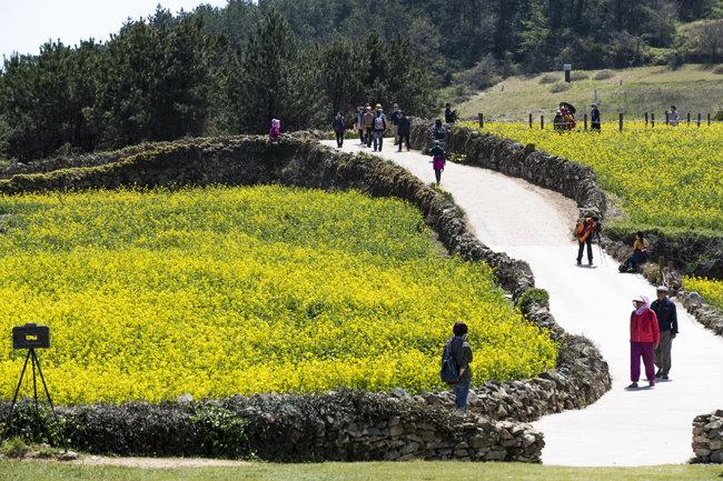 유채꽃과 돌담, 흙길로 만들어진 서편제길.
