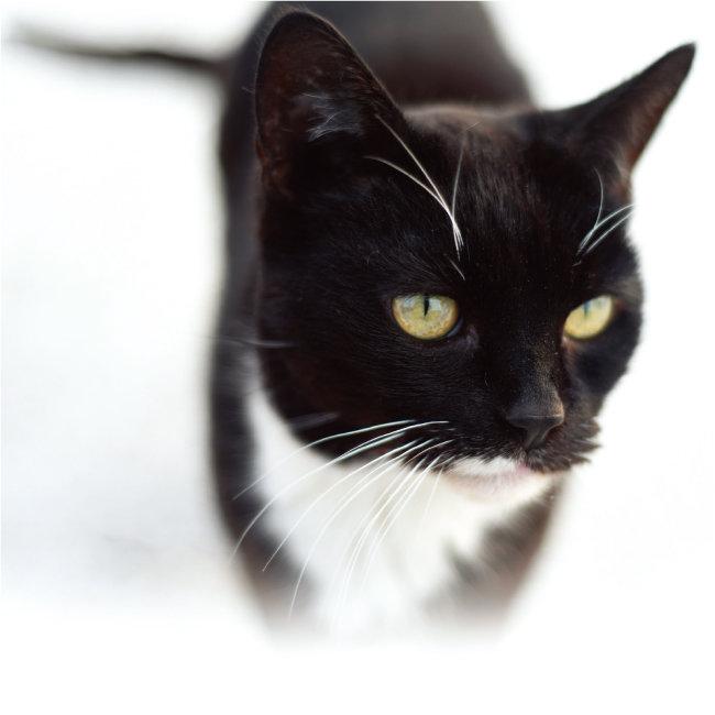 고양이는 사람 없는 세상에서 최고 포식자로 군림할 가능성이 높다. [shutterstock]
