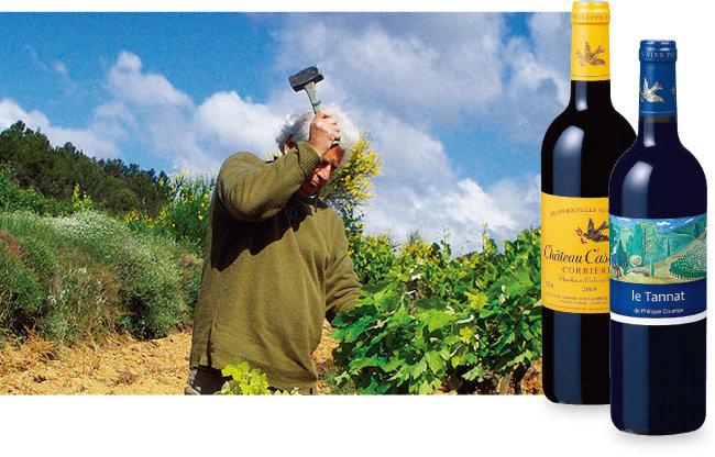포도밭에서 일하는 필리프 쿠리앙. 소박한 농부 모습 그대로다. 샤또 까스까데, 르 따나 드 필리프 쿠리안 와인(왼쪽부터). [사진 제공 · ㈜샤프트레이딩]