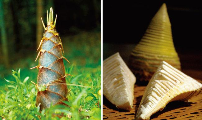 죽순은 노르스름한 속살이 나올 때까지 껍질을 벗긴 뒤 초벌 삶기를 해 아리고 떫은맛을 빼낸다.