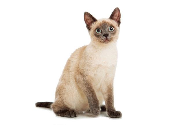 고양이는 야생성이 있기 때문에  매일 일정 시간 사냥놀이를 시켜주는 것이 필요하다. [shutterstock]