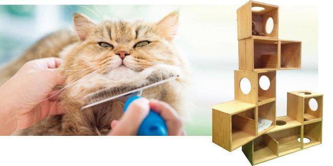고양이는 수시로 빗질을 해주는 것이 좋고, 수직 공간 놀이터를 설치해줘야 한다. [shutterstock]