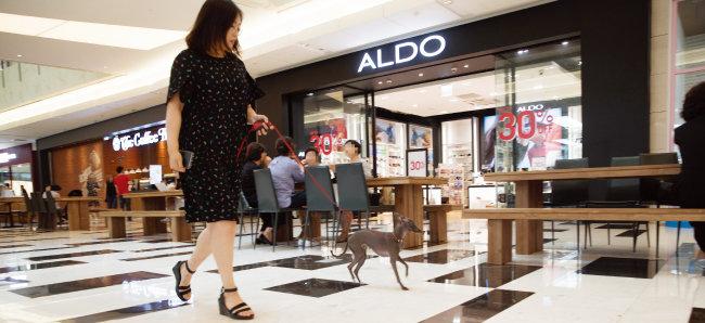 이제 서울 여의도 IFC몰에서도 반려동물과 함께 쇼핑을 즐길 수 있다. 이탤리언 그레이 하운드 준이와 함께 IFC몰을 둘러봤다.