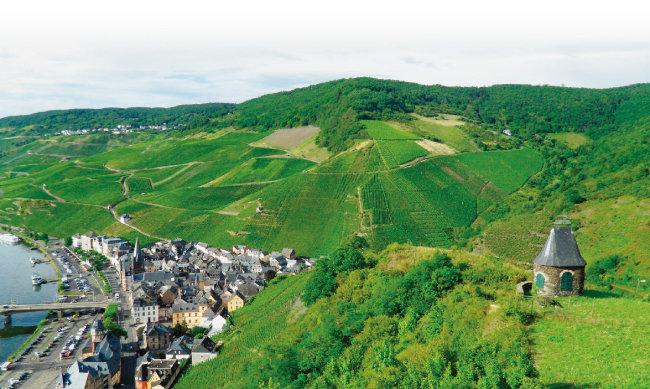 독토르 포도밭은 베른카스텔쿠에스 마을 바로 뒤 가장 급경사인 곳에 위치하고 있다. [사진 제공 · 김상미]