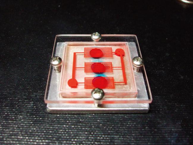 전자회로와 세포를 결합해 만든 '장기칩(organ-on-a-chip)'. [동아DB]