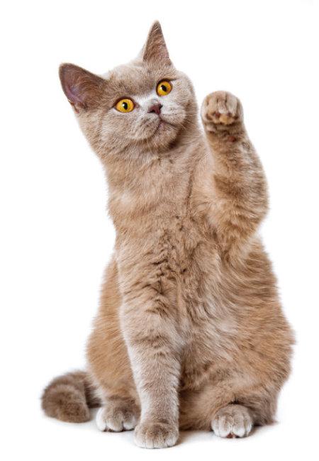 고양이 문제 행동을 개선하는 솔루션으로 사냥놀이는 필수적이다.