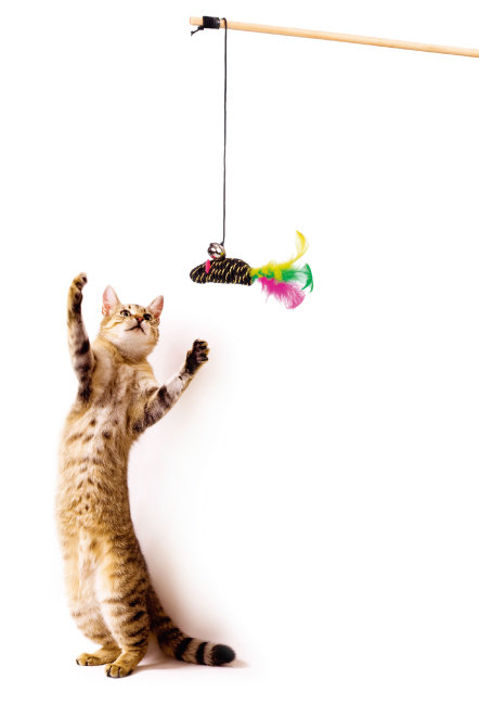 개에게 산책이 있다면 고양이에겐 사냥놀이!