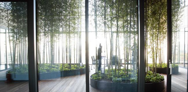 디어스 타워 9층과 10층의 공중정원(아트리움)에는 대나무 숲이 조성돼 있다. 창으로 쏟아지는 늦가을 오전 햇살이 눈부시다. [지호영 기자]