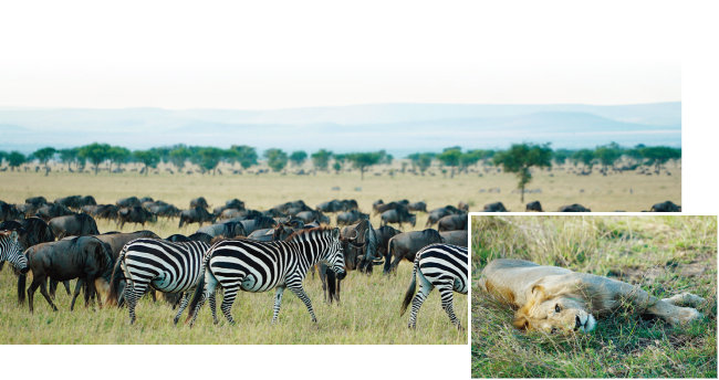 아프리카행의 동기가 된 초원의 야생동물들.