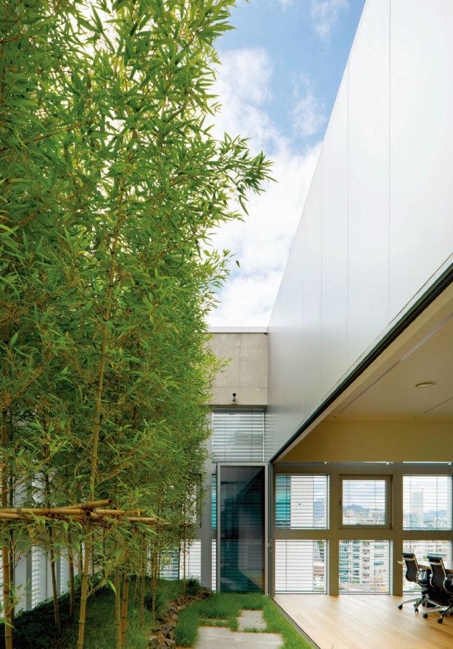 8층 회의실 공간에 위치한 대나무숲 공중정원. [사진 제공 · 노경]
