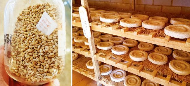 일본에서 들여온 쌀 흩임누룩(입국·왼쪽). 한국 토종 누룩은 뭉쳐진 형태인 데 반해, 일본 누룩은 뻥튀기처럼 흩어져 있다. [사진 제공 · 전통주갤러리]