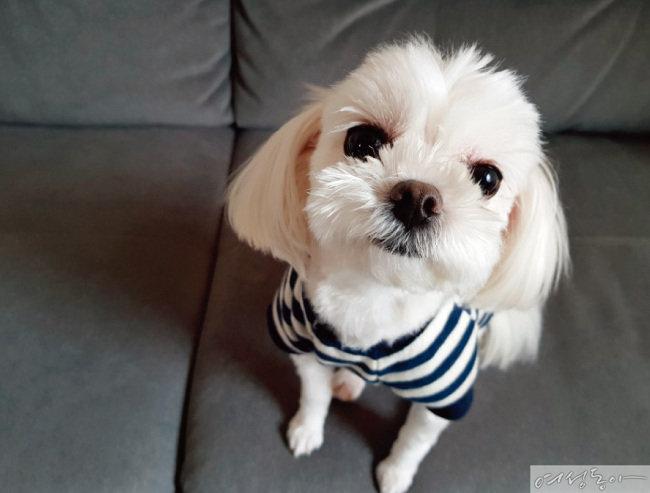 최현석 셰프가 추천하는 신상 펫푸드 반려견 품평회
