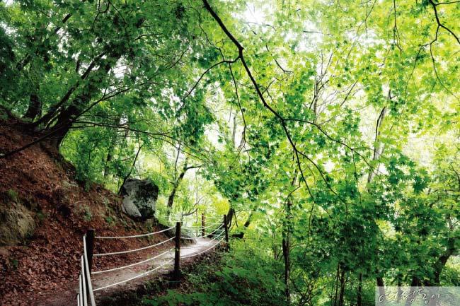 숲이 깊어질수록 길은 또렷해지네