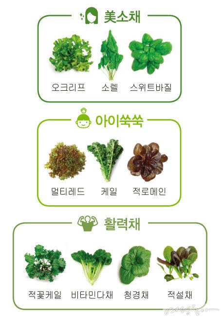 세 가지 채소 패키지 중 자신의 건강에 꼭 알맞은 채소를 선택할 수 있다.