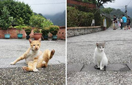 저물어간 전성기, 지금은 다정한 고양이 마을 '허우통'