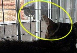 고양이판 로미오와 줄리엣?
