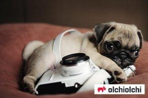 오늘은 '국제 강아지의 날'