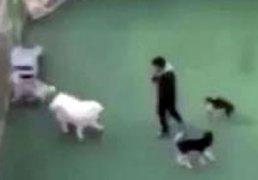 강아지유치원 학대 파문