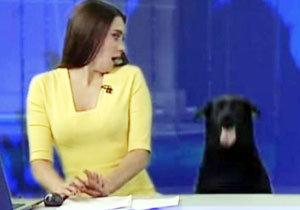 러시아 뉴스에 깜짝 등장한 개… 15초만에 유명세