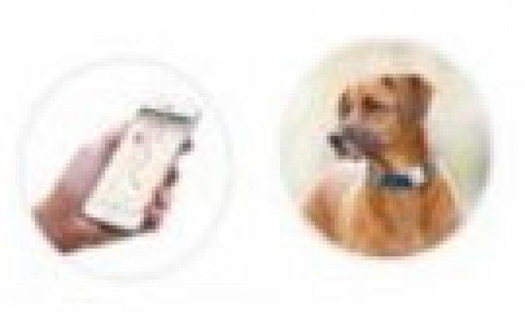 GPS 목줄, 센서 자동 화장실…독일의 인기 반려동물 용품