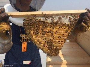 여의도 한 회사에는 12만 마리의 벌이 산다