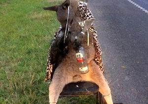 죽은 캥거루 사체 의자에 묶어 도로에 전시…끔찍한 동물학대 행위