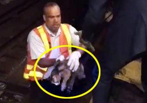 """""""철로 밑에 고양이가 있다"""" 뉴욕 지하철, 출근길 운행 중단"""