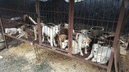 강아지들 보는 앞에서 고압전기로 개 7마리 도살한 60대