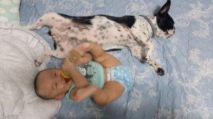 10개월 아기와 18개월 멍뭉이의 '특급 우정'