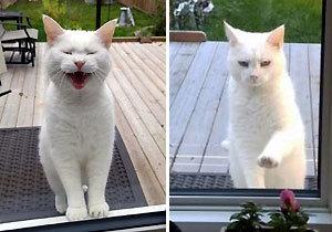 """1년째 매일 찾아오는 이웃고양이 """"간식 주세요"""""""