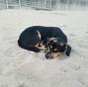 해수욕장서 하염없이 주인 기다리던 개, 새주인에 입양