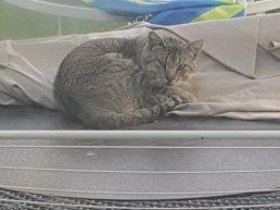 발톱 빠진 고양이 이야기… 버려진 동물의 비애