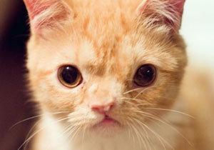얼굴 비틀어진 고양이, 인스타그램 스타되다!