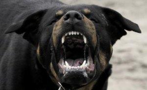 개 물림사고 땐 견주에 책임묻는다… 최대 징역 3년