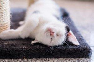 '고양이에게 안전한 집' 만드는 방법 10가지