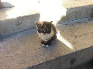 고양이는 친한 사람에게 왜 몸을 비빌까