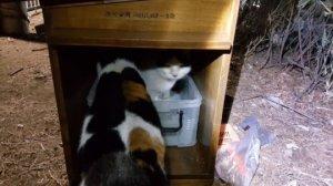 '고양이 공중 화장실'이 생긴다