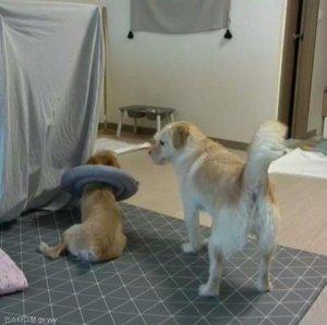 """""""괜찮아~"""" 학대 트라우마에 몸서리치는 친구 다독여주는 강아지"""