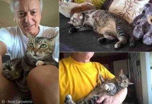 논에서 죽어가던 고양이의 놀라운 비포&애프터